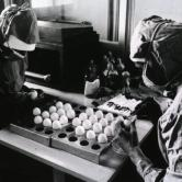 Preparation of measles vaccines at the Tirania Institute