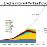 Effect of Montreal Protocol on Effective Chlorine Concentration